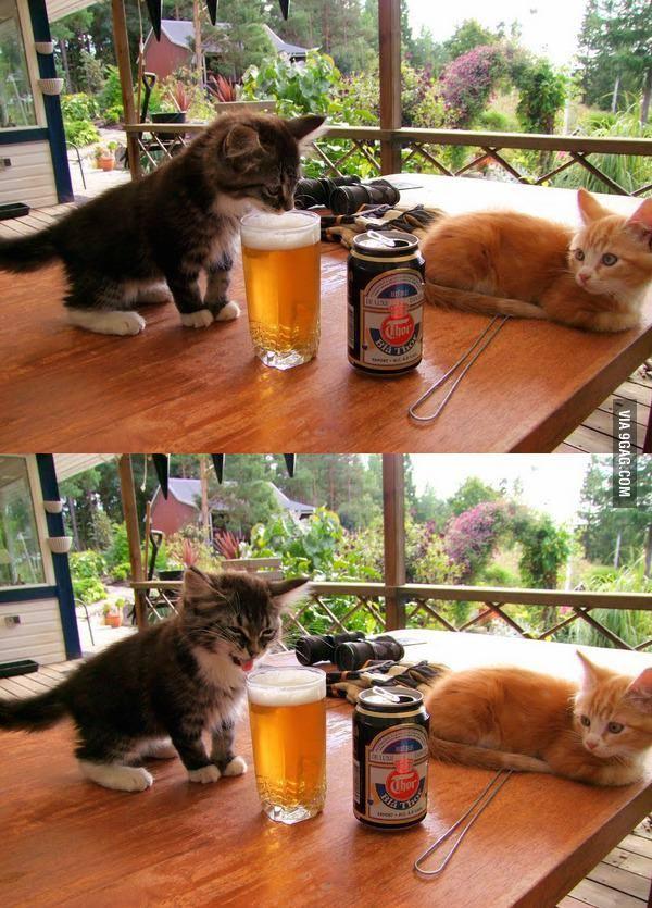 cat get some beer