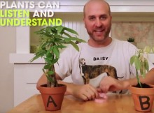 power of words on plants